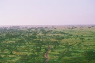 Serengeti seen from a hot air balloon. Photo: Cornelia Kaufmann