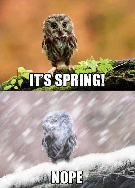 Spring Nope