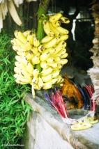 Bananas and traditional headdress. Copyright Cornelia Kaufmann