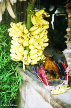 Bananas and traditional headdress. Copyright Cornelia Kaufmann