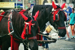 Horse-drawn carriages take tourists through the alleys of Old Town. Copyright Cornelia Kaufmann