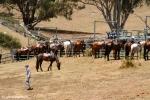 Cattle muster on Leconfield Farm, Jackaroo, Jillaroo, School, Tamworth, Kootingal, WWOOF, cowboy, Cornelia Kaufmann