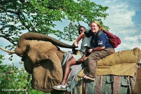 Elephant safari in Victoria Falls, Zimbabwe. Copyright Cornelia Kaufmann