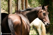 Horses are matched to a rider's skill level, so if you say you are a competent rider, be prepared to handle a more temperamental horse. Copyright Cornelia Kaufmann