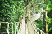 Kakum National Park's Canopy Walkway. Copyright Cornelia Kaufmann