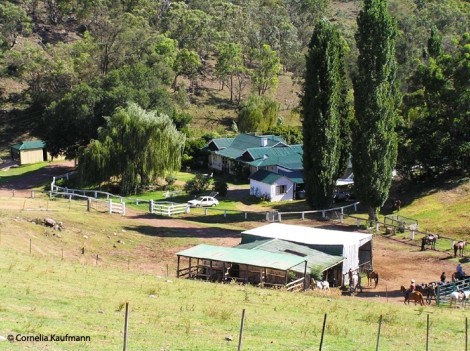 The Leconfield homestead (background, centre) with horse yards and tack/feed shed. Copyright Cornelia Kaufmann