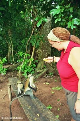 Me feeding Mona Monkeys at Tafi-Atome. Copyright Cornelia Kaufmann