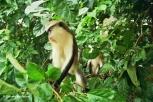 Mona Monkey. Copyright Cornelia Kaufmann