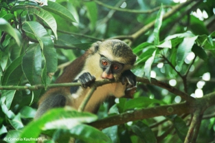 Monkey watching the tourists. Copyright Cornelia Kaufmann