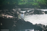 Galápagos penguin. Copyright Cornelia Kaufmann