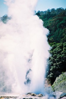 Prince of Wales Feathers Geyser at Te Puia. Copyright Cornelia Kaufmann
