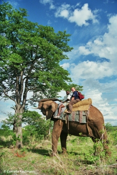 Riding an elephant on safari. Copyright Cornelia Kaufmann