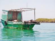 Sea lion on a boat. Copyright Cornelia Kaufmann