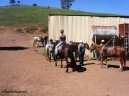 The horse yard and feed shed at Leconfield. Copyright Cornelia Kaufmann