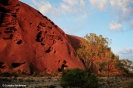 Uluru is a deep red in the morning. Copyright Cornelia Kaufmann