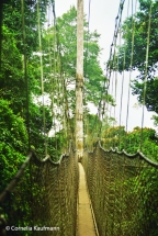 The narrow canopy walkway in Kakum National Park. Copyright Cornelia Kaufmann