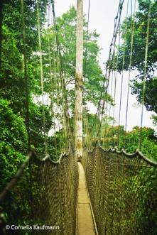 The narrow canopy walkway in Kakum National Park. Copyright Cornelia Kaufmann