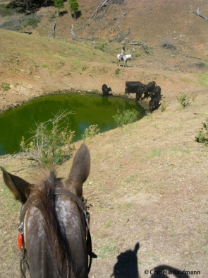 Full-day muster on horseback, rounding up strays by the watering hole. Copyright Cornelia Kaufmann