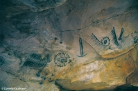 Aboriginal cave paintings, Yourambulla Caves. Copyright Cornelia Kaufmann