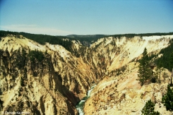The Grand Canyon of the Yellowstone with Yellowstone River. Lower Yellowstone Falls are just about visible centre-left in the wooded area- Copyright Cornelia Kaufmann