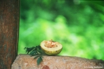 Fresh fruit. Copyright Cornelia Kaufmann
