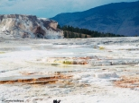 Terraces at Mammoth Hot Springs. Copyright Cornelia Kaufmann