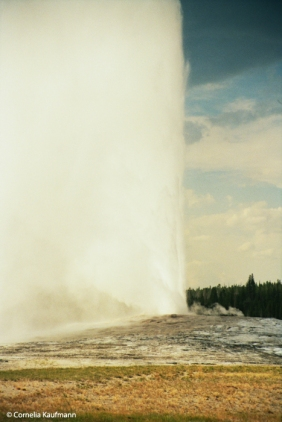 Eruption of Old Faithful Geyser in Yellowstone National Park. Copyright Cornelia Kaufmann