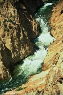 Yellowstone River flowing through the Grand Canyon of the Yellowstone. Copyright Cornelia Kaufmann
