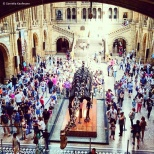 Dinosaur skeleton in Hintze Hall at the Natural History Museum © Cornelia Kaufmann