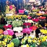 Bloemenmarkt in Amsterdam. ©Cornelia Kaufmann